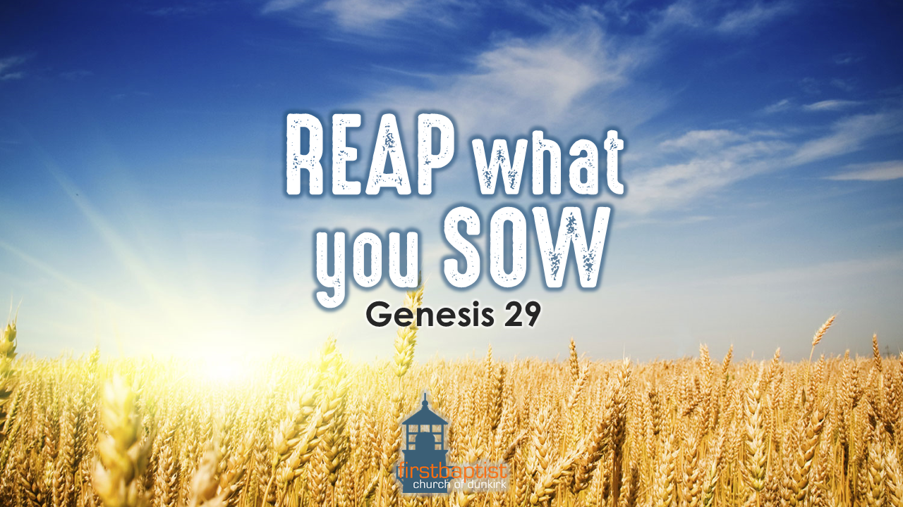 Reap what you Sow — First Baptist Church Dunkirk